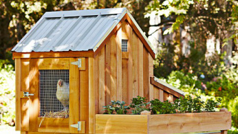 1363042827 Chicken Coop Items