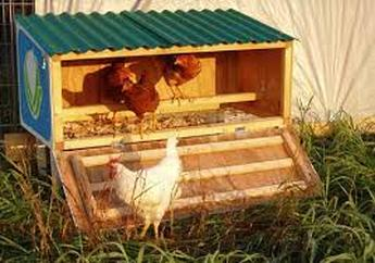Chicken Coop Items